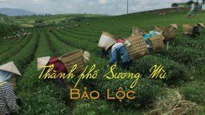 Tổng hợp điểm check in Bảo Lộc không thể bỏ qua - 34